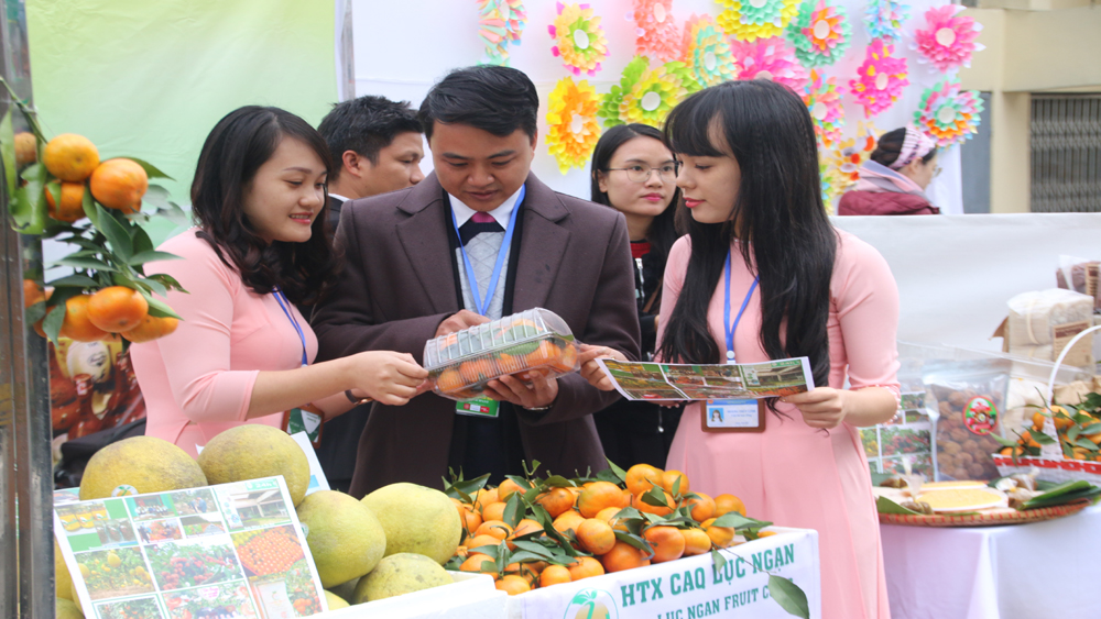Bắc Giang có hai gian hàng với nhiều đặc sản trưng bày tại Liên hoan Ẩm thực Quốc tế